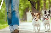 경기도, 취약가구에 반려동물 의료서비스 지원사업 추진