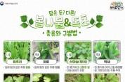 봄나물과 유사한 독초 구별법 및 섭취시 주의사항