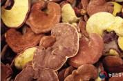 영지버섯, 불면증 완화하고 호흡기 건강에 도움