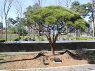 식목일 행사계기 처창설 60주년 기념식수